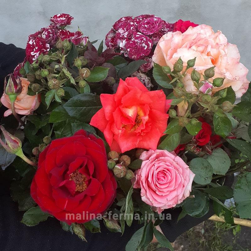 Набір 10 чайно-гібридних троянд